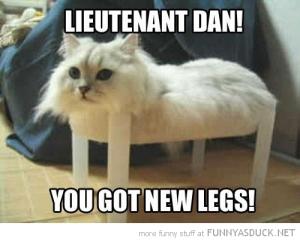 funny-cat-no-legs-plastic-box-lietenant-dan-pics